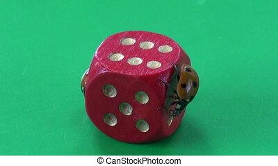 two ladybug ladybird on dice