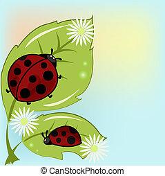 Two ladybugs on leaflets