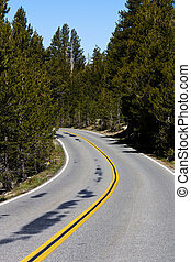 Two Lane Road Curve Admidst Pine Trees