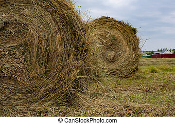 Two large round bobbins with hay close-up. Rural life, horizontal