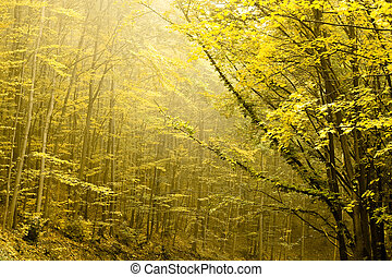 Two layers of trees in an autumn forest.