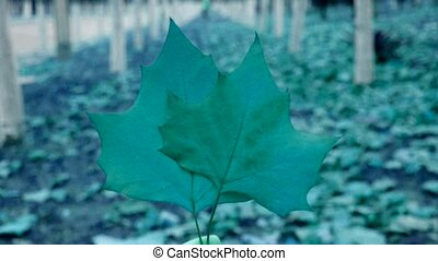 two leafs in woods,shaking