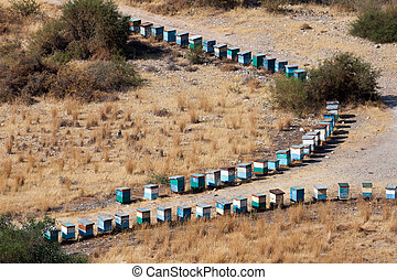 Two lines of beehives in Cyprus