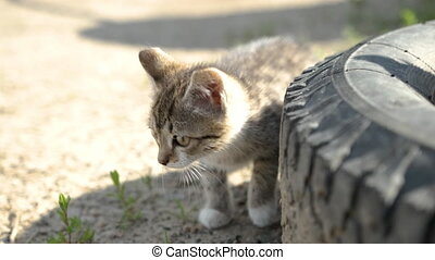 Two little beautiful kitten sits near the wheel and looks