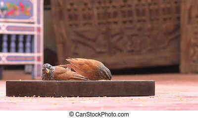 Two little birds eating seeds - Two little birds, the house...