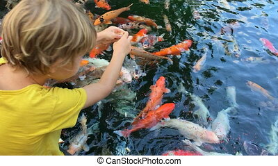 Two little boys feed colorful sacred carps in a pond in ...