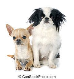 two little dogs
