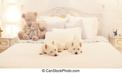 Two little dogs sit on the bed in the bedroom. - Two little...