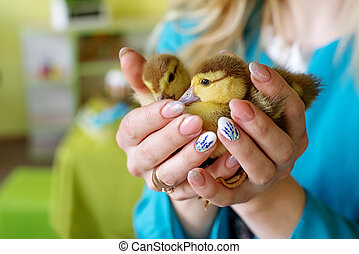 Two little ducklings in the hands of mother and daughter on a green background