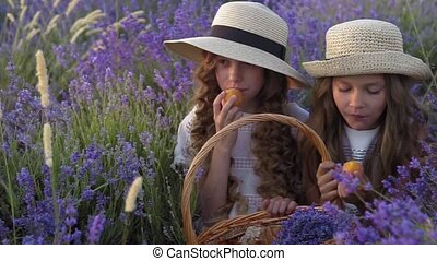 Two little girls friends eating apricots on a picnic in a lavender field