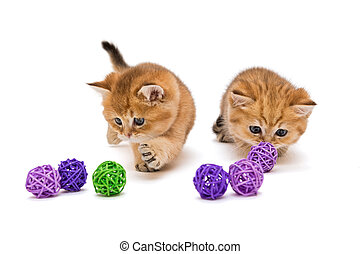 Two little kitten playing with balls