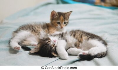 two little kittens are sleeping. two little kittens a are...
