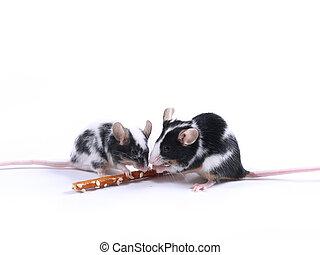 mice - two little mice