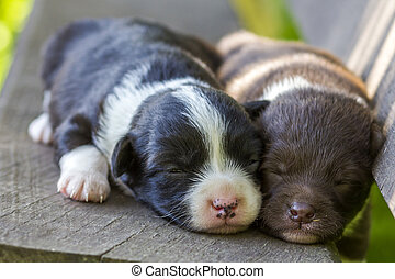 Two little puppy dogs sleeping on wooden bench