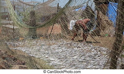 Two local people drying fish - Local man drying fish on...
