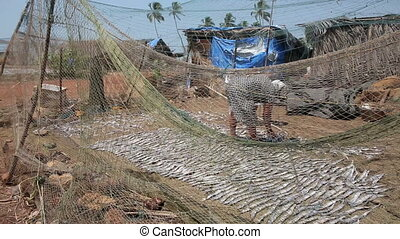 Two local people drying fish - Two local people, man and...