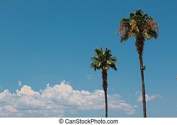 Two Long Green Palm Trees: Ornamental Vegetation