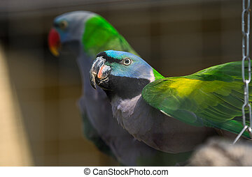 Two lovebird parrots sit on a tree branch
