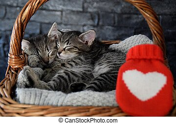 two lovely kittens sleeping in a wicker basket