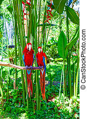 Two macaw parrots are sitting on a branch.
