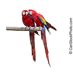 Macaw Parrots Isolated On White background