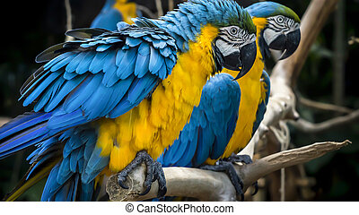 Two macaw