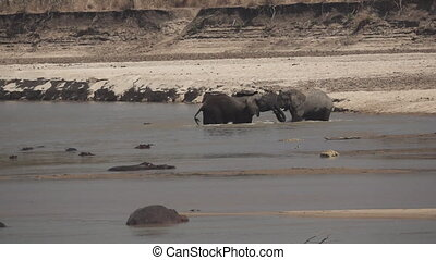 Two male elephants fighting in the river in slow-mo