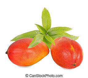 Two mangoes isolated on white background