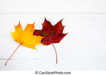 Two maple leaves on white wooden background