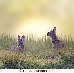 Two Marsh Rabbits - Marsh Rabbits Eating Green Grass