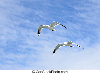Two mediterranean white seagulls flying against the cloudy sky