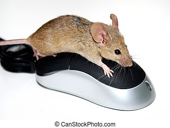 Mouse on a computer mouse