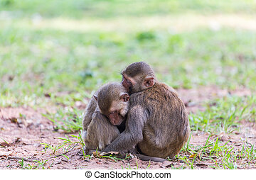 Two monkey sleeping