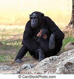 Two monkeys in a zoo