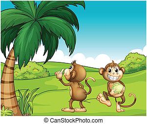 Two monkeys near the coconut tree