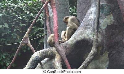 Two monkeys sitting on a tree branch