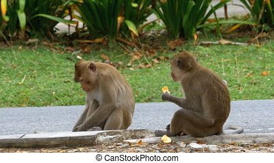 Two monkeys sitting on the ground eating food at the Khao...