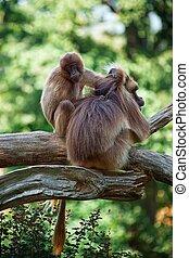 Two monkeys,
