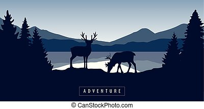 two moose in wildlife at beautiful lake in blue mountains