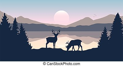 two moose in wildlife at beautiful lake in the mountains