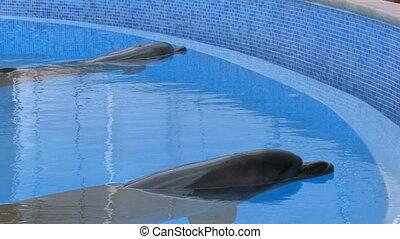 Two motionless dolfins
