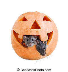 I shave the front of my pumpkin with a cheese grater then ...  |Pumpkin Mouse With Cheese