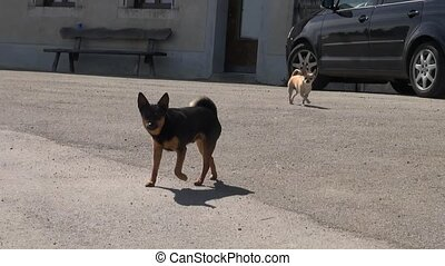 Two neighbor puppies dog barking