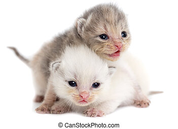 Two newborn kitten isolated on white background .