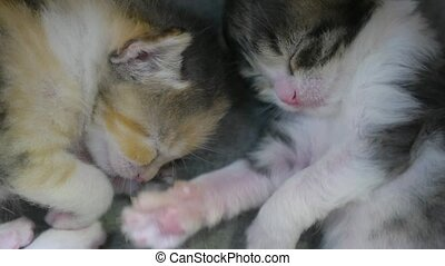 two newborn kittens are sleeping cute. newborn kittens from...