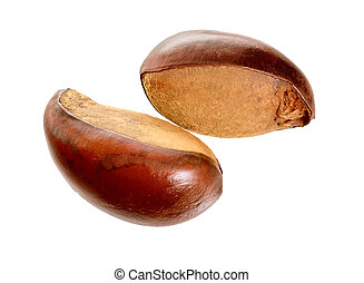 Two nuts Vitellaria paradoxa , commonly known as shea tree or shi tree, Karite. Isolated on white background.