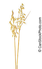 Two oat ears isolated on a white background