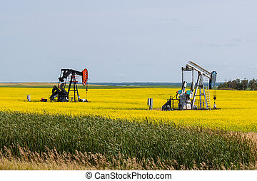 Two Oil Wells in a Bright Yellow Canola Field