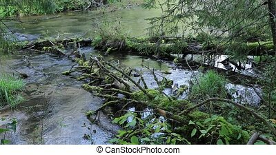 two old moss covered trees fallen into a river in the...
