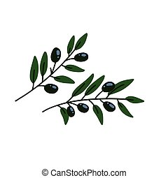 Two Olives branches . Greek olives branch set, summer oil food tree twigs and leaves flat vector illustration.